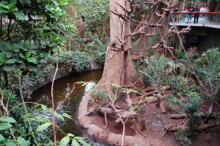 Betty's Exhibit : a piece of rainforest at Henry Doorly Zoo (Omaha, NE)