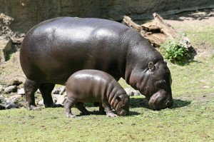 Mother and Calf at Berlin Zoo